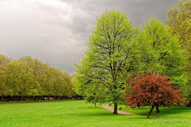 photo d'arbres au printemps